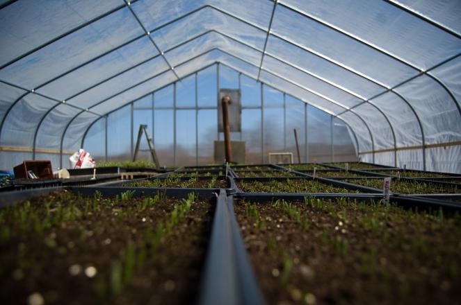 Unidentified Plant Units